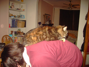 Hoping_the_cat_will_jump_off_if_she_bend